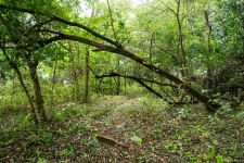 Thickly carpeted forest floor