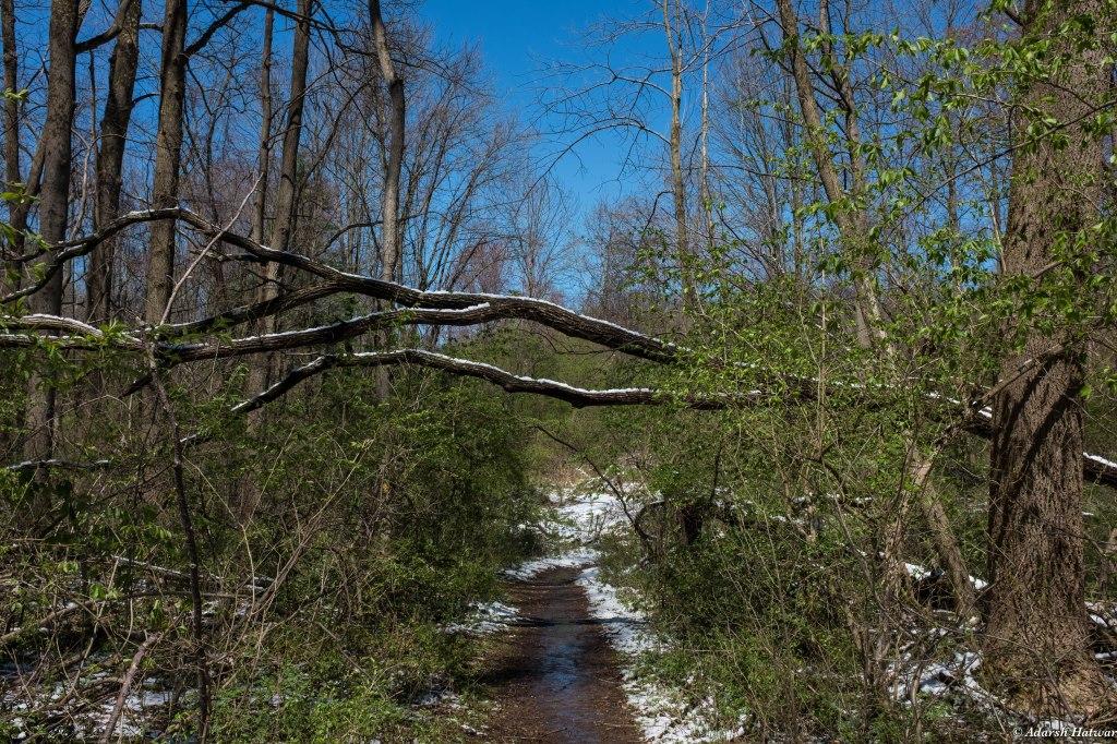 Ridley Creek-13