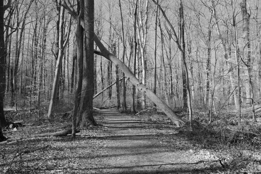 Ridley Creek-1