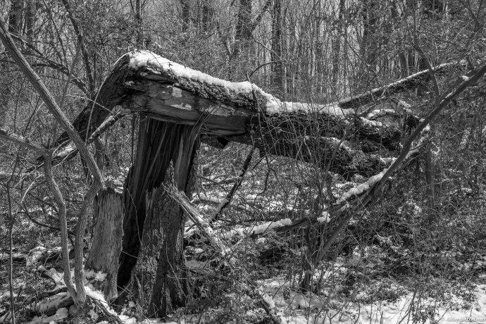 Ridley Creek-19