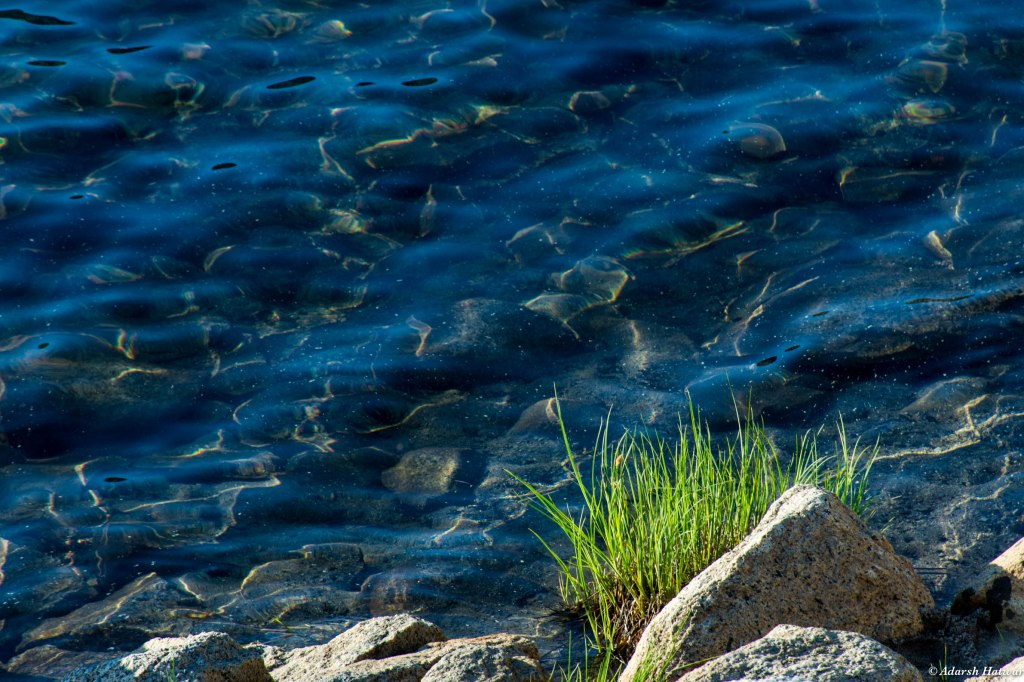In the early morning light, the lake surface shimmered in the shallows